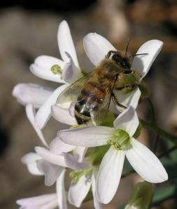 Méhpempő infók + vásárlás